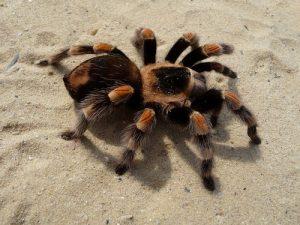 Érzelmek - pókoktól való félelem