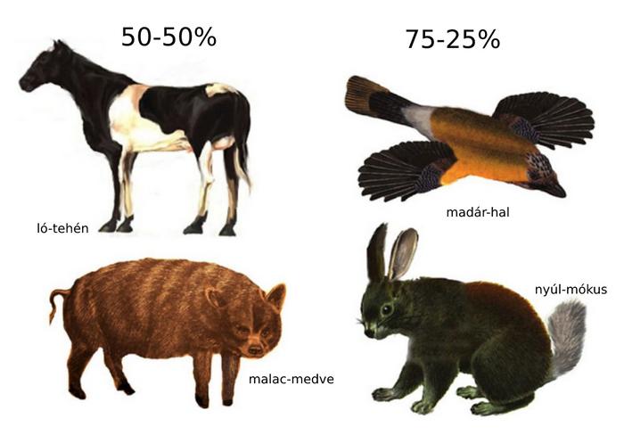 A kísérletben szereplő állatok
